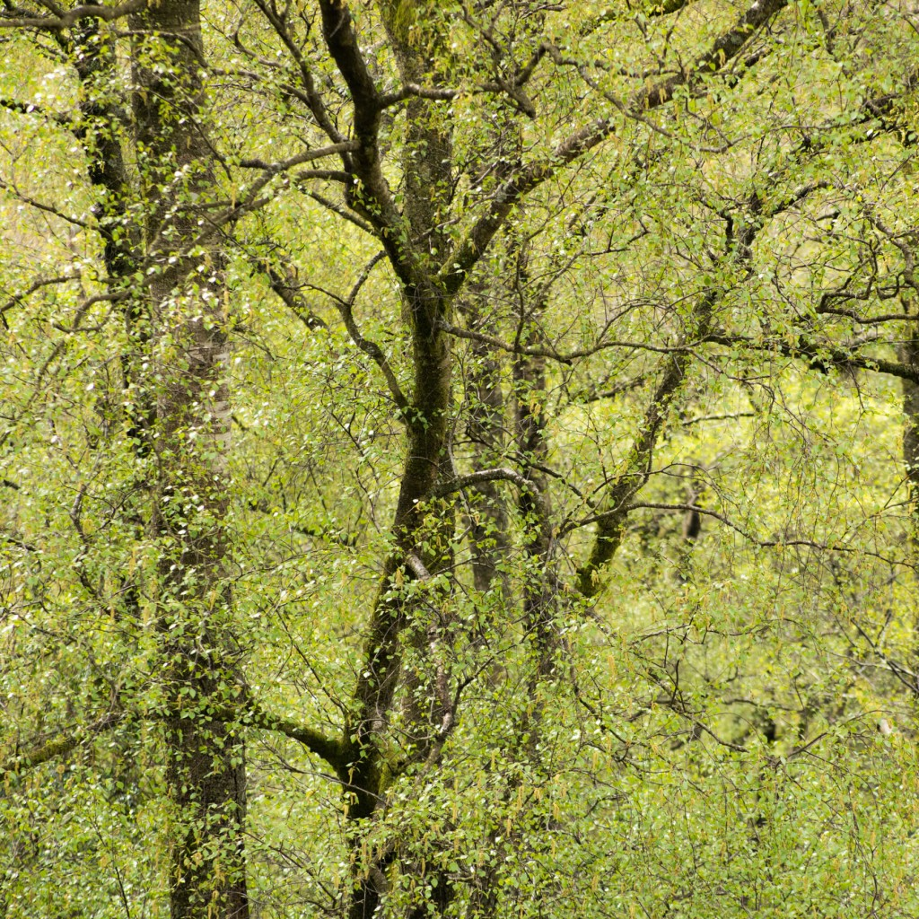 Spring wood in Troutbeck valley