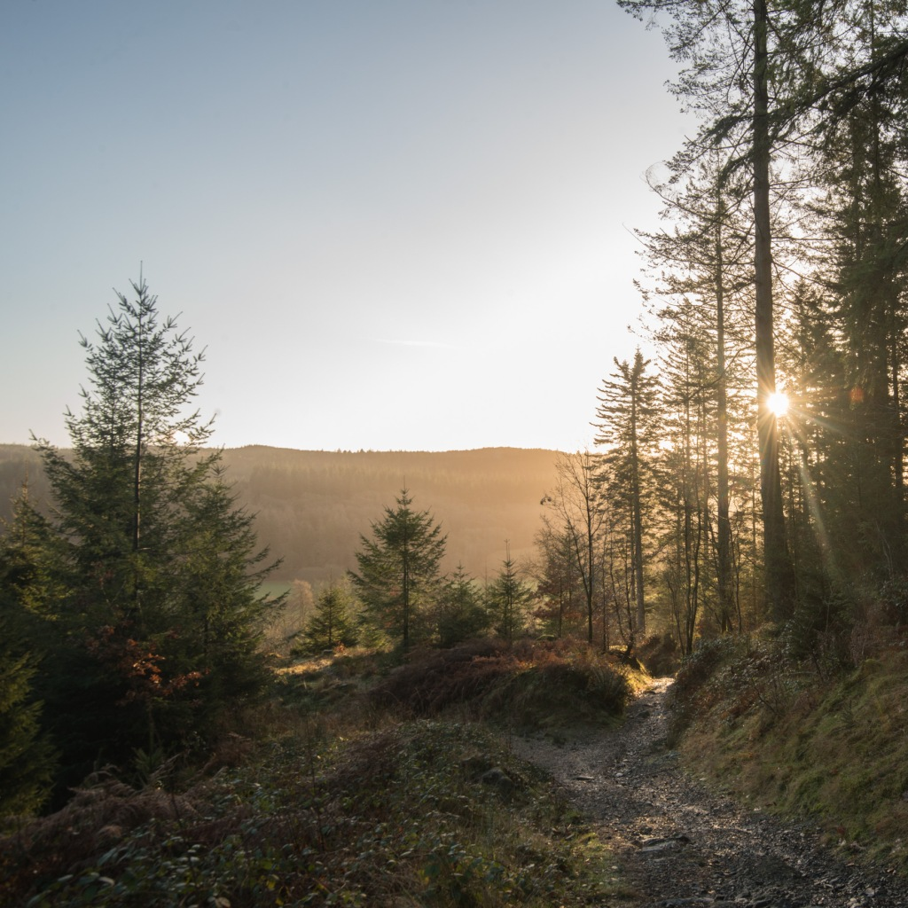 sunlight in Grizedale Forest