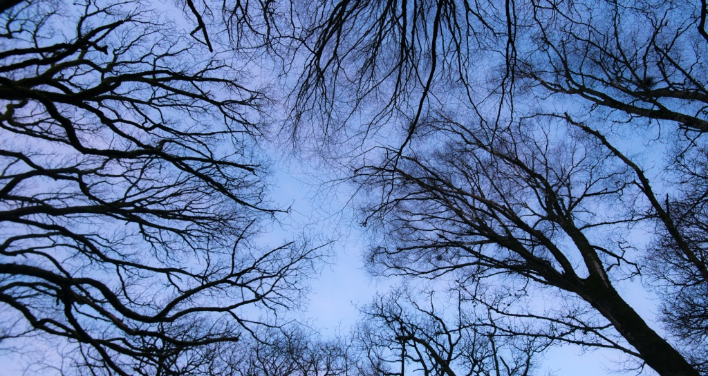 Pre-dawn light on the trees filled with birdsong