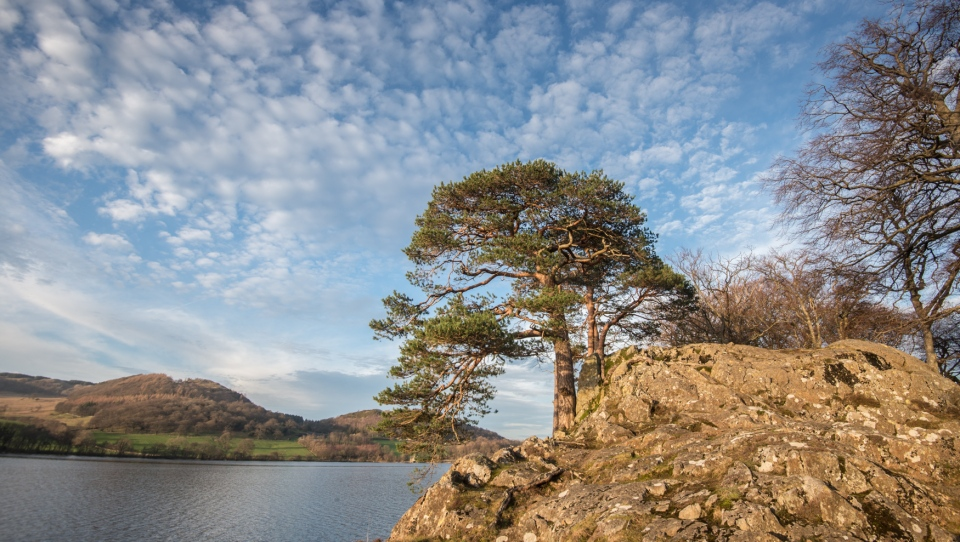 Pines on a rocky outcrop on the edge of Ullswater