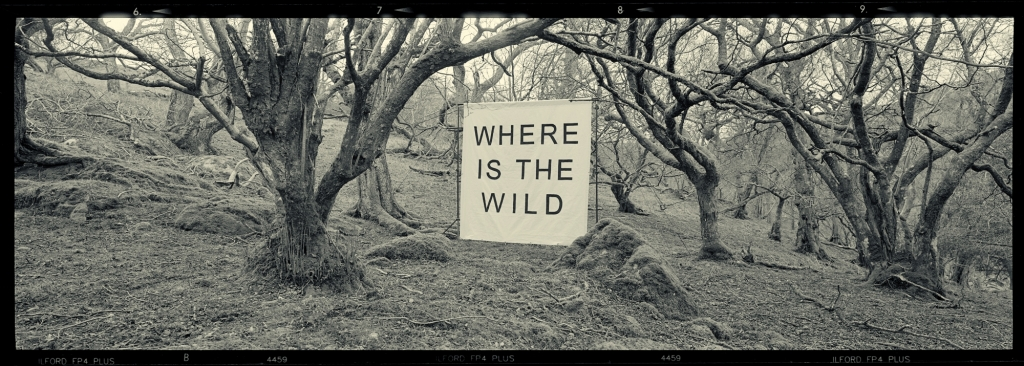 Where is the Wild canvas