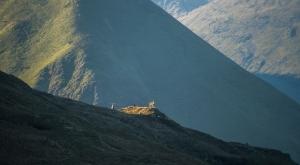 Red deer watching us from below Brock Crags