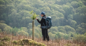 the hundreds of new trees planted in the Rydal valley are beginning to burst out of their protective covers