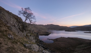 Birch on the edge of Cat Crag lit before dawn