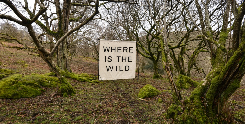 Where is the Wild canvas in ancient woodlands above Naddle Farm